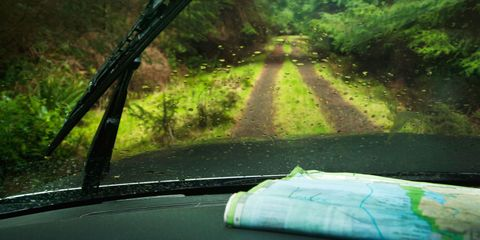 Nature, Green, Natural environment, Glass, Windscreen wiper, Windshield, Forest, Sunlight, Tints and shades, Automotive window part,