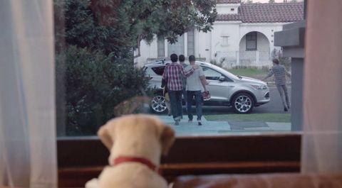 Wheel, Human, Stuffed toy, Dog breed, Dog, Carnivore, Vehicle door, Alloy wheel, Collar, Leash,