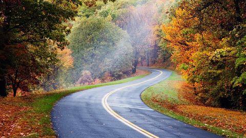 Road, Nature, Vegetation, Green, Natural landscape, Infrastructure, Leaf, Road surface, Deciduous, Landscape,