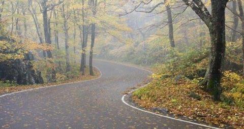 Road, Nature, Vegetation, Natural environment, Road surface, Green, Natural landscape, Asphalt, Infrastructure, Leaf,