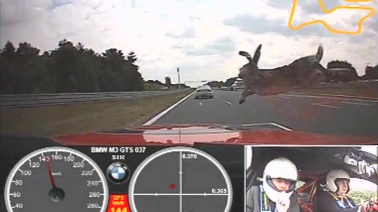 When a rabbit meets an M3, the BMW always wins