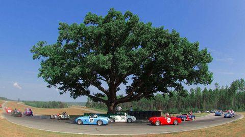 Motor vehicle, Tree, Classic car, Woody plant, Antique car, Plain, Parking, Classic, Vintage car, Shade,