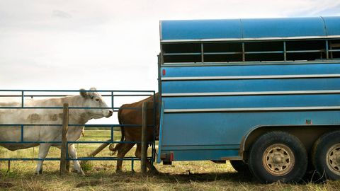 Wheel, Automotive tire, Fender, Working animal, Rim, Rural area, Teal, Farm, Pasture, Turquoise,