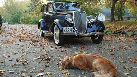 Tire, Vehicle, Land vehicle, Automotive design, Dog, Dog breed, Classic car, Leaf, Car, Carnivore,