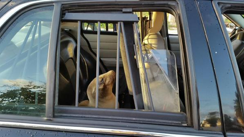 Glass, Automotive exterior, Vehicle door, Carnivore, Automotive window part, Canidae, Transparent material, Family car, Working dog,