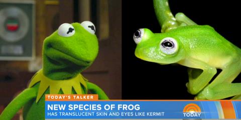 Kermit The Frog New Frog