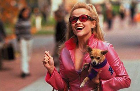 Eyewear, Vision care, Dog breed, Carnivore, Dog, Sunglasses, Dog supply, Facial expression, Street fashion, Companion dog,