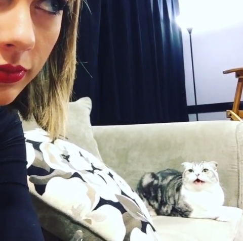 Taylor Swift Is Finally Home And Meredith Is Not Pleased