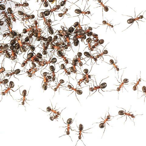 Invertebrate, Organism, Arthropod, Insect, Pest, Orange, Line, Amber, Terrestrial animal, Parasite,