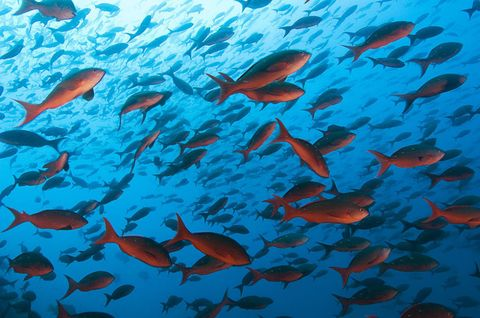 Organism, Blue, Underwater, Fluid, Vertebrate, Orange, Fish, Red, Fin, Aqua,