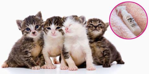 Organism, Skin, Vertebrate, Pink, Facial expression, Iris, Whiskers, Snout, Carnivore, Kitten,