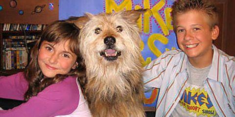 Human, Smile, Fun, Vertebrate, Carnivore, Happy, Shelf, Dog breed, Facial expression, Dog,