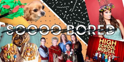 Dog breed, Vertebrate, Dog, Toy dog, Headpiece, Eyelash, Hair accessory, Dog supply, Youth, Puppy,