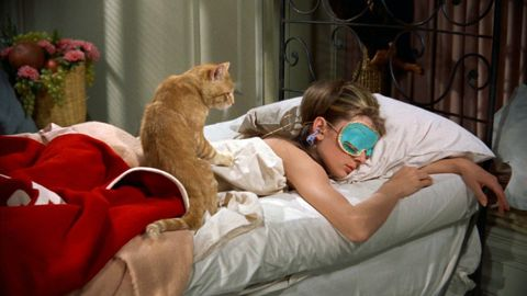Cat, Felidae, Small to medium-sized cats, Nap, Comfort, Carnivore, Turkish van, Fawn,