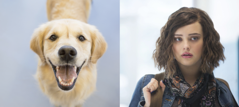 Dog breed, Yellow, Skin, Dog, Vertebrate, Carnivore, Style, Iris, Jaw, Eyelash,