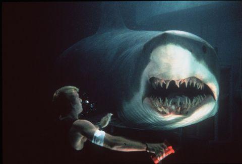 Shark, Great white shark, Cartilaginous fish, Lamnidae, Jaw, Lamniformes, Fish, Sand tiger shark, Tiger shark, Mouth,