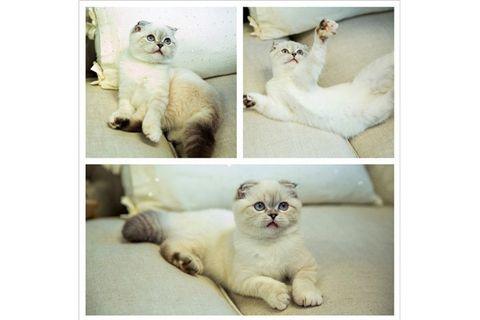 Taylor Swift Cat Olivia Benson - Taylor Swift And Olivia ...