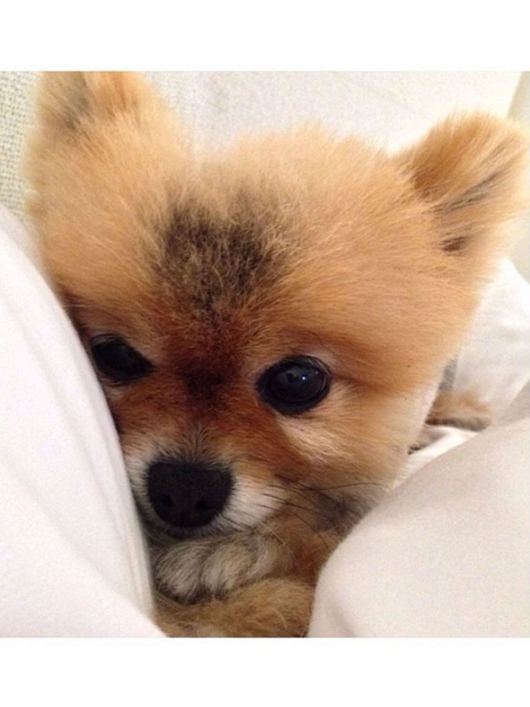 The Absolute Cutest Celebrity Pets Gallery - The Active Times