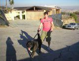 nick lachey walking a dog