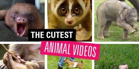 Organism, Nature, Skin, Vertebrate, Photograph, Terrestrial animal, Facial expression, Iris, Snout, Jaw,