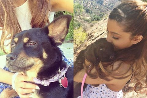 Celebrity Pets With Famous Names