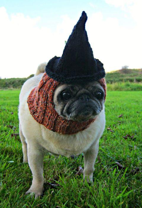 76dacfd06d3 10 Pug Halloween Costumes - Best Dog Halloween Costumes