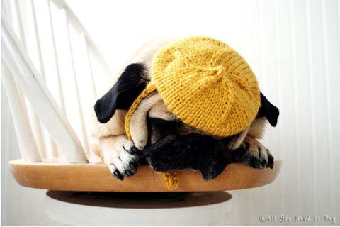 Yellow, Stuffed toy, Toy, Beige, Serveware, Plush, Pet supply, Bowl, Woolen, Dog toy,