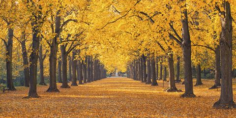 Deciduous, Nature, Yellow, Branch, Leaf, Natural landscape, Autumn, Amber, Woody plant, Sunlight,