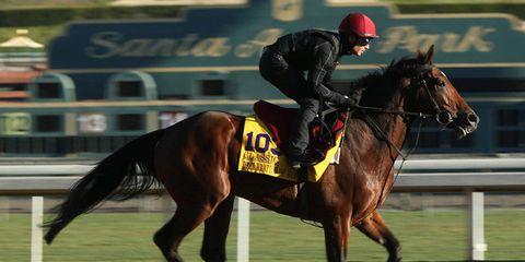 Human, Jockey, Halter, Bridle, Horse supplies, Shoe, Rein, Horse, Horse tack, Equestrian sport,
