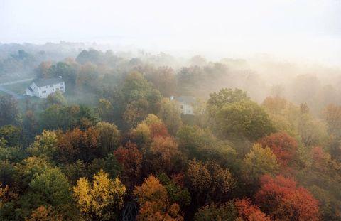 Vegetation, Nature, Natural environment, Atmosphere, Atmospheric phenomenon, Leaf, Deciduous, Plant community, Natural landscape, Mist,
