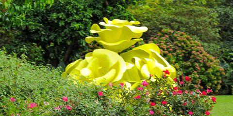 Plant, Yellow, Shrub, Petal, Garden, Flower, Plant community, Garden roses, Botany, Rose family,