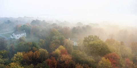 Autumn foliage shrouded in early-morning mist just outside Poughkeepsie, in New York's Hudson River Valley.