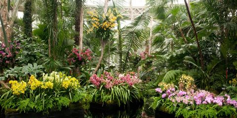 Interior of Orchid Show.