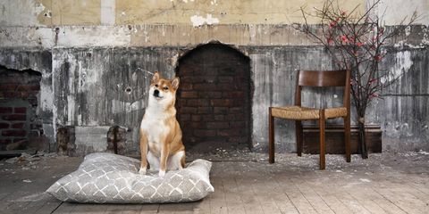 Interior Designer Dogs - Designer Dogs at Home on home security dogs, pets dogs, retirement dogs, health dogs, home defense dogs, law dogs, school dogs, new york dogs, food dogs, animals dogs, baby dogs,