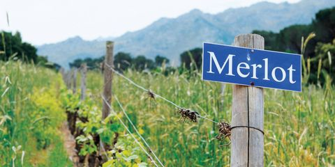 Vegetation, Plant community, Nature reserve, Land lot, Street sign, Wire fencing, Agriculture, Rural area, Signage, Field,