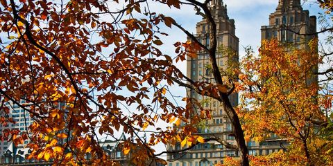 Branch, Deciduous, Leaf, Twig, Autumn, Woody plant, Spire, Tower, Steeple, Cathedral,