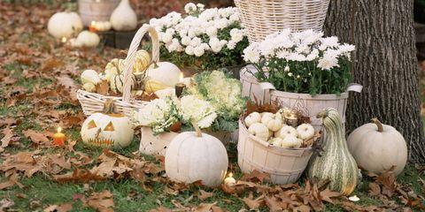 Tree, Flower, Plant, Pumpkin, Spring, Yard, Botany, Garden, Twig, Branch,