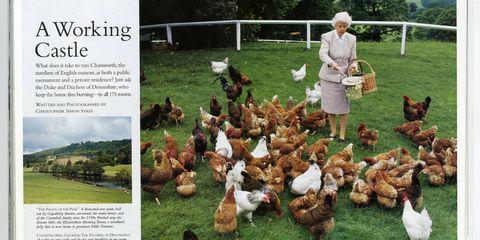 Organism, Vertebrate, Phasianidae, Galliformes, Bird, Chicken, Fowl, Adaptation, Poultry, Pasture,