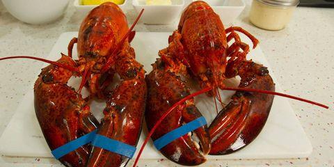 Arthropod, Food, Ingredient, Decapoda, Lobster, Recipe, Bowl, Crustacean, Seafood, Cobalt blue,