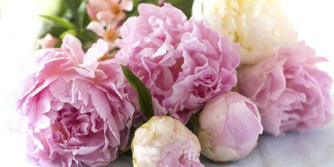 Petal, Flower, Pink, Cut flowers, Flower Arranging, Floral design, Floristry, Bouquet, Artificial flower, Rose family,