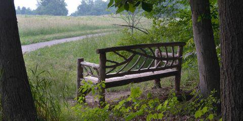 Natural landscape, Plant, Bench, Nature reserve, Outdoor bench, Plain, Trunk, Pasture, Deciduous, Grass family,
