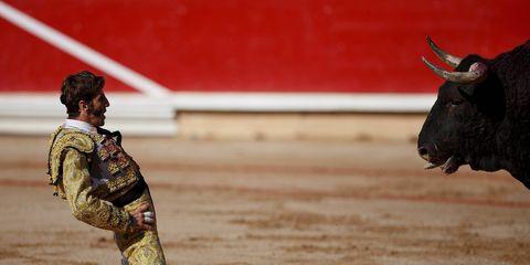 Matador, Sport venue, Bullring, Bull, Tradition, Bovine, Horn, Performance, Natural material, Terrestrial animal,