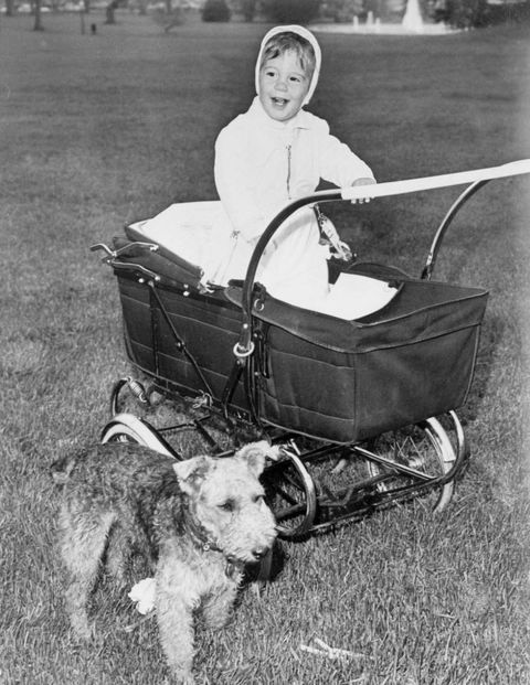 Dog breed, Vertebrate, Dog, Carnivore, Collar, Sporting Group, Vintage clothing, Leash, Monochrome, Companion dog,