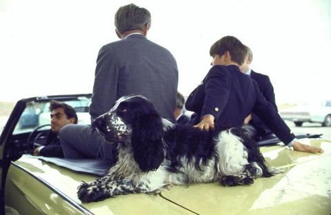 Human, Dog breed, Dog, Carnivore, Vehicle door, Sporting Group, Windshield, Hood, Companion dog, Spaniel,