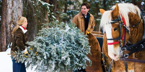 Human, Winter, Horse supplies, Bridle, Halter, Rein, Horse, Horse tack, Working animal, Sorrel,