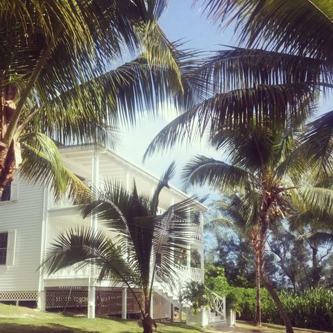 Tree, Arecales, Woody plant, Real estate, House, Home, Palm tree, Tropics, Attalea speciosa, Landscaping,