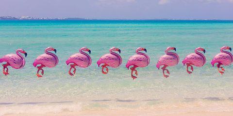 Body of water, Organism, Natural environment, Bird, Magenta, Flamingo, Pink, Water bird, Greater flamingo, Adaptation,