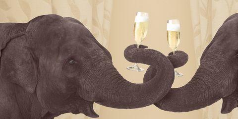 Elephant, Elephants and Mammoths, Organism, Skin, Indian elephant, Terrestrial animal, Adaptation, Glass, Drink, Working animal,