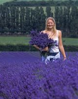 woman holding a large bouquet of lavender as she walks through a lavender field