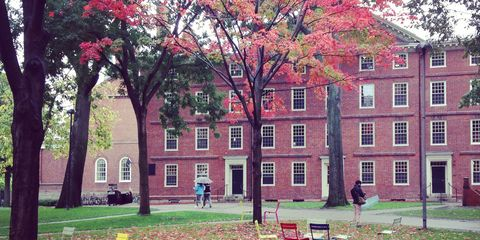 Window, Leaf, Tree, Building, Woody plant, Bench, Lawn, Park, Campus, Autumn,